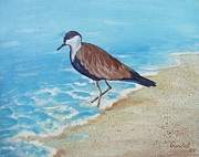 Randall Brewer Prints - Beach Bird Print by Randall Brewer
