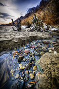 Log Photos - Beach brook at Scarborough Bluffs by Elena Elisseeva