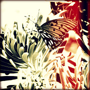 Florida Flowers Posters - Beach Butterfly I Sunset Poster by Chris Andruskiewicz