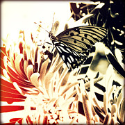 Florida Flowers Posters - Beach Butterfly II Sunset Poster by Chris Andruskiewicz