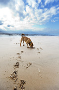 Animal Paw Print Posters - Beach Dog Poster by Eldad Carin