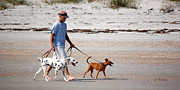 Rderder Photos - Beach Dogs by Roy Erickson