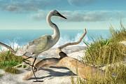 Daniel Eskridge - Beach Egret