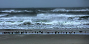 Storm Prints Metal Prints - Beach Feast - Outer Banks Ocracoke Metal Print by Dan Carmichael