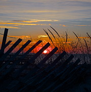 Amazing Jules - Beach Fence