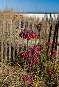 Beach Fence Photo Posters - Beach Fence and Red Flowers Poster by Michelle Wiarda
