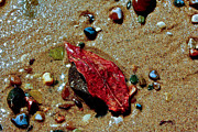 Indiana Dunes Prints - Beach Finds Print by Lynne Dohner