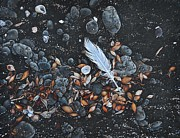 Elena Kolotusha - Beach floor. Flinders Vic