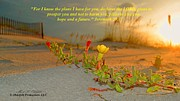 Jeremiah 29:11 Prints - Beach Flower Sunset I mlo Print by Mark Olshefski