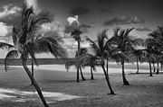 Mick Burkey - Beach Foliage