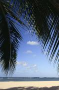 Ocean And Sand - Beach Framed by Palms by Brandon Tabiolo