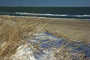 Amazing Jules - Beach Grass