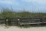 Decorative Benches Metal Prints - Beach Grass and Bench  Metal Print by Cathy Lindsey