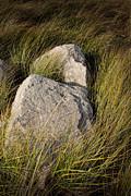 Randall Nyhof - Beach Grass and Rocks near Lake Michigan