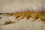 Judy Hall-Folde - Beach Grass and Sugar Sand