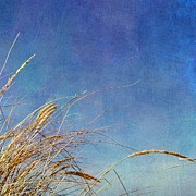 Seacape Framed Prints - Beach Grass in the Wind Framed Print by Michelle Calkins