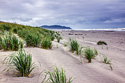 Walking Path Prints - Beach Grass Print by Robert Bales