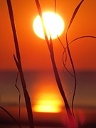 Nikki McInnes - Beach Grass Sunrise