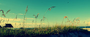 Under The Ocean Prints - Beach Grass under the Morning Sun in Sarasota Print by Patricia Awapara