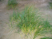 Botanical Beach Posters - Beach Grass Poster by Will Borden