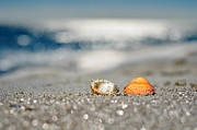 Seashell Art Prints - Beach Lovers Print by Laura  Fasulo