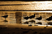 John Collins Metal Prints - Beach Morning Metal Print by John Collins