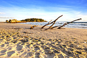 Driftwood Prints - Beach Mount Maunganui New Zealand Print by Colin and Linda McKie