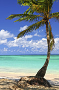 Palms Posters - Beach of a tropical island Poster by Elena Elisseeva