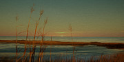 Sea Oats Prints - Beach Park Sunrise Print by Greg Sharpe
