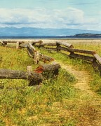 Vancouver Island Photos - Beach Path by Janice Austin