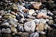 Granite Prints - Beach pebbles  Print by Elena Elisseeva