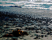 Bronze Prints - Beach Pebbles with Seaweed   Print by Gilbert Artiaga