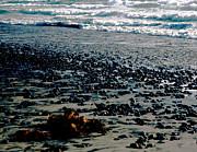 Beach Pebbles With Seaweed   Print by Gilbert Artiaga