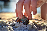 Beach Shell Sand Sea Ocean Art - Beach Play by Laura  Fasulo