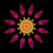 Beach Rose Iv Flower Mandala Print by David J Bookbinder