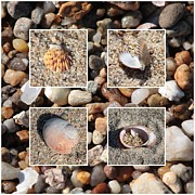 Warm Tones Photo Framed Prints - Beach Shells and Rocks Collage Framed Print by Carol Groenen