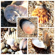 Beach Theme Framed Prints - Beach Shells Collage Framed Print by Carol Groenen