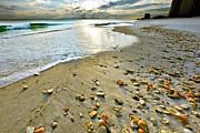 Eszra Tanner - Beach Shells Green Waves...