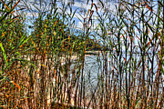 Beach Fence Digital Art Posters - Beach Thru the Tall Grasses Poster by Michael Thomas