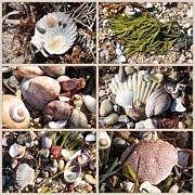 Colored Rocks Posters - Beach Treasures Poster by Carol Groenen