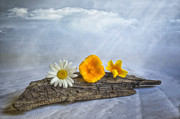 Daisy Digital Art Metal Prints - Beach treasures Metal Print by Veikko Suikkanen