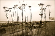 Tina Hannaford - Beach weed