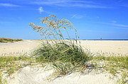 Steven Michael Photography And Art Prints - Beach Wheat Print by Steven  Michael