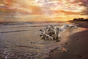 Seastar Metal Prints - Beached Beauty Metal Print by Betsy A Cutler East Coast Barrier Islands