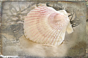 Seashell Framed Prints - Beached Framed Print by Betty LaRue