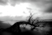 Douglas Stucky Metal Prints - Beached Tree II Metal Print by Douglas Stucky