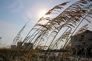 Sea Oats Digital Art Prints - Beachside Print by Gary Pavlosky