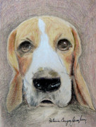 Color Pencil Drawings - Beagle Best in Show by Patricia Januszkiewicz