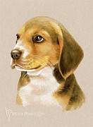 Victor Powell - Beagle Puppy Portrait