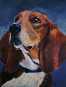 Brown White Dog Framed Prints - Beagle Framed Print by Shirl Theis
